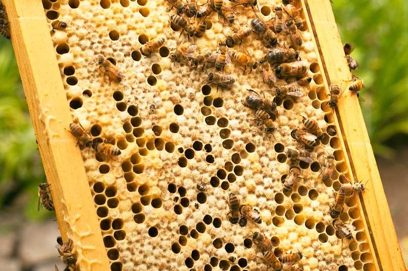 Projeto envolve 110 apicultores em áreas de influência da CMPC