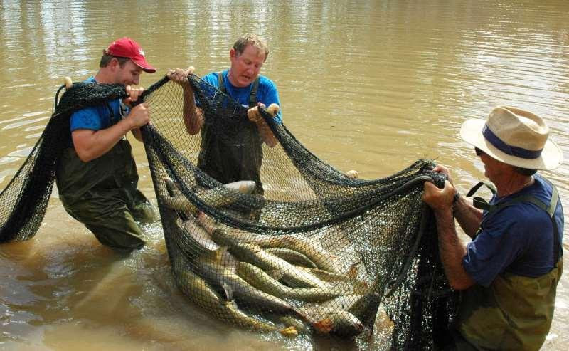 Produção estadual alcança 14,8 milhões de toneladas anuais de peixes