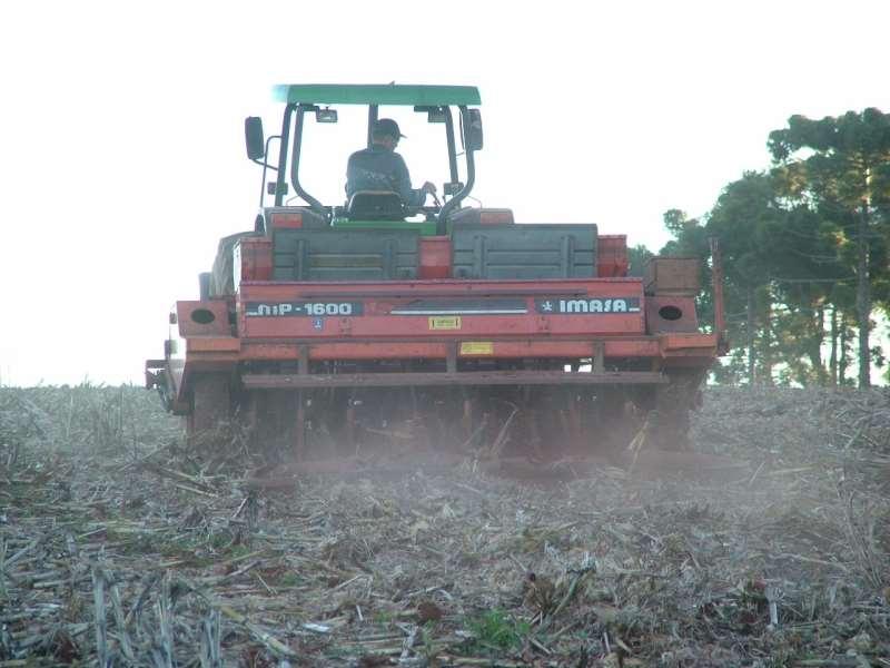 Semeadura do trigo foi mais lenta, mas cultura será implantada dentro do período recomendado