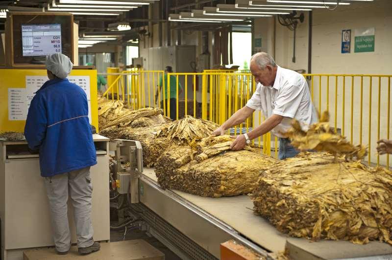 Vagas na fabricação de produtos do fumo lideraram parte do saldo positivo no agronegócio