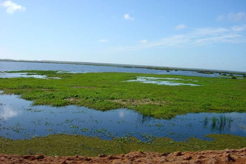 Bioma Pampa, que tem entre suas paisagens a Reserva Ecológica do Taim, integra ecossistema gaúcho
