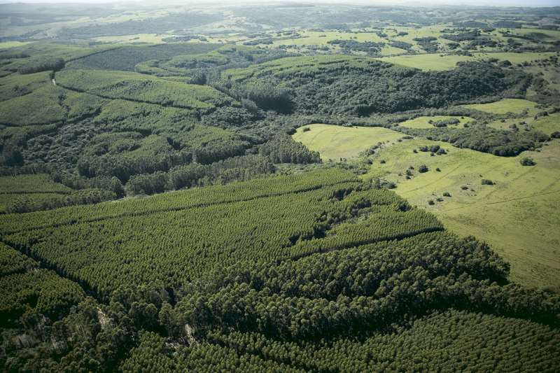 MEIO AMBIENTE - Crise hídrica - Área de Preservação da Celulose Riograndense - Crédito Celulose Riograndense - Divulgação