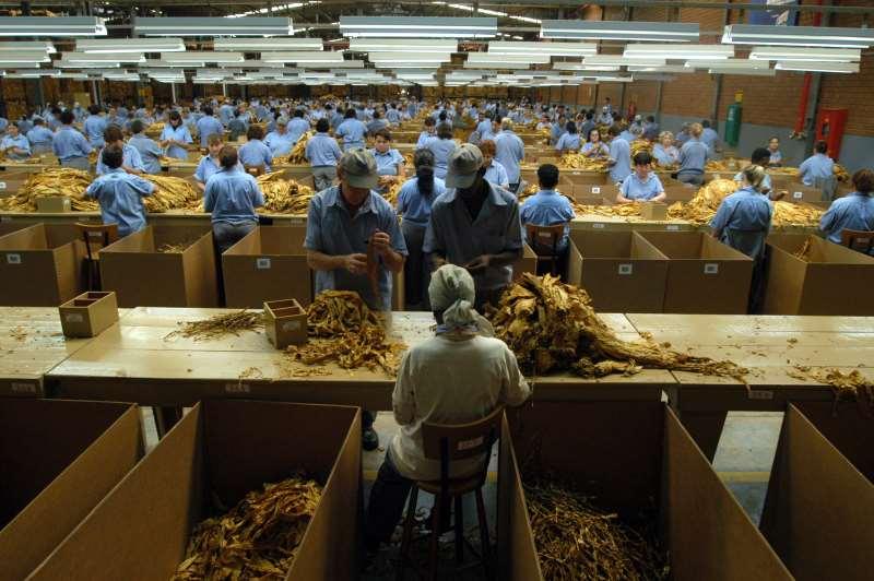 Indústria fumageira liderou as demissões durante o período