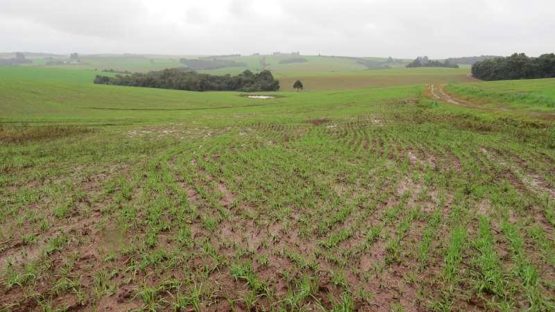 Excesso de chuvas em alguns municípios tem causado lixiviação dos fertilizantes e erosão dos solos