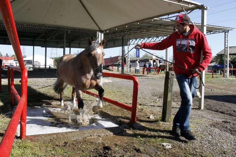 Processo para transporte de animais promete ganhar em agilidade