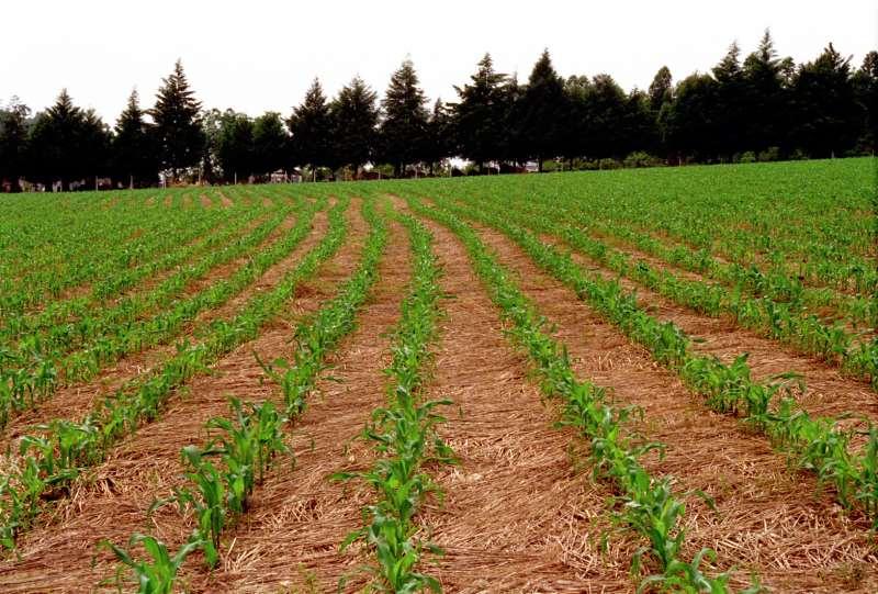 Produto é base para o plantio direto, prática que beneficia o solo
