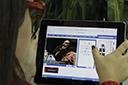 STJ decide que cobrança da taxa de conveniência na venda de ingressos online não é ilegal
