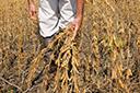 Ano de muitas incertezas para produtores de grãos
