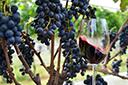 Sistema permite cadastro e análise de dados de produtores de uva e vinho