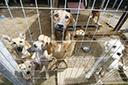 Prefeito encaminha projeto de lei de proteção aos animais contra maus-tratos