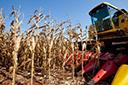 Clima beneficia colheita do milho, destaca Emater