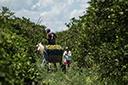 Agronegócio gaúcho cria mais de 4 mil empregos formais em novembro, mostra FEE