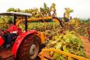 Fumicultores e indústria não chegam a acordo