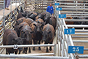 Brasil se consolida como maior exportador de carne bovina