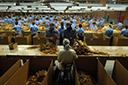Estado perde mais de 10 mil empregos no campo